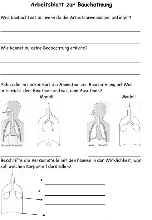 Großartig Atmung Arbeitsblatt Fotos - Arbeitsblätter für ...