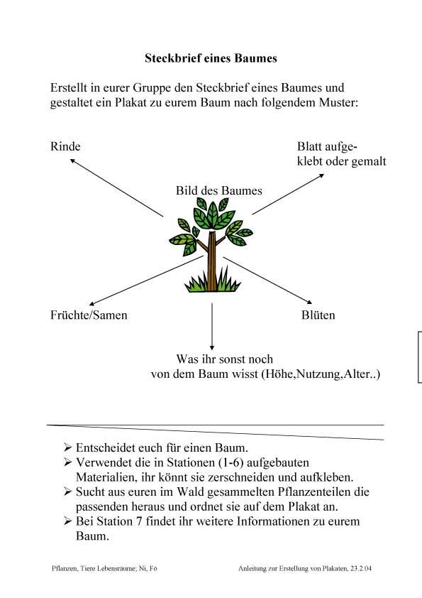 Unterrichtsmaterialien: Wald